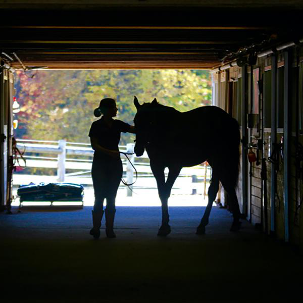 A horse and rider in silhouette in a barn.